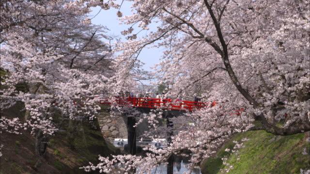 Fixed-point shot of cherry trees along the moat of Hirosaki Park