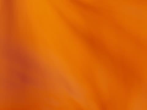 Flabaming oranabge on yellow