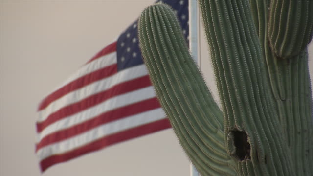 flag of the united states of america and a cactus - cactus stock videos & royalty-free footage