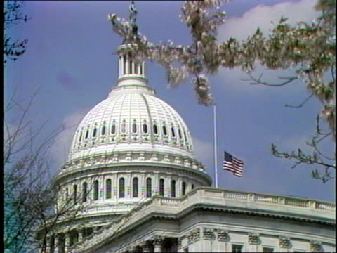 flag on top of u.s. capitol building; u.s. capitol dome in bg, tree branches with flower blossoms in fg. u.s. capitol building and dome with american... - stars and stripes stock videos & royalty-free footage