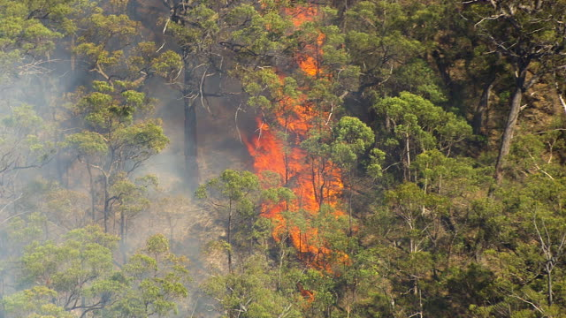 A flame on forest with smoke getting watered