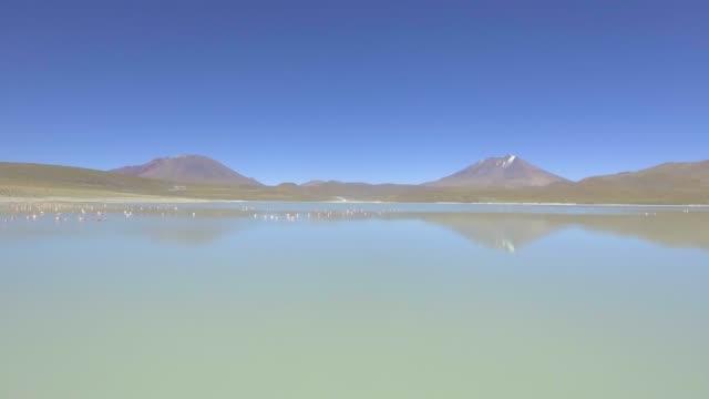 flamencos flying by the stinking lake (laguna hedionda) in the eduardo avaroa park near the uyuni desert in bolivia - ウユニ塩湖点の映像素材/bロール