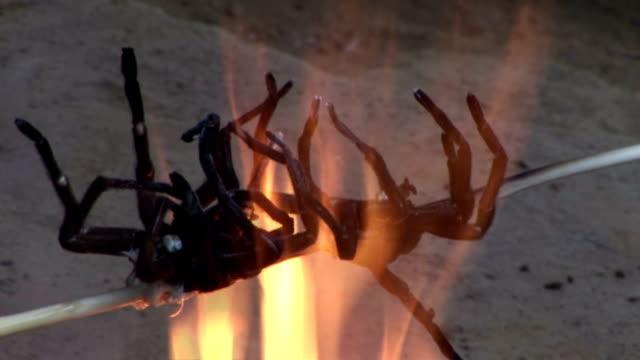 vídeos de stock, filmes e b-roll de flames burn a couple of tarantulas pierced by a stick. - nojo