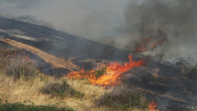 Flames consume a bush at the edge of burned-over ground on a hillside
