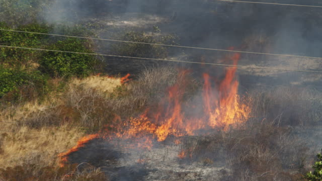 Flames consume dry grass and berry vines at the edge of charred ground