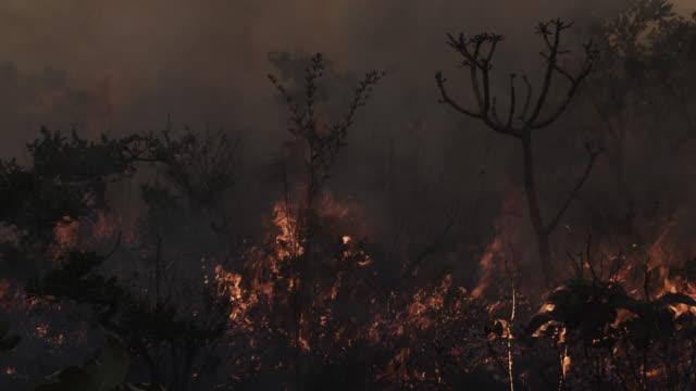 flames consume trees and other vegetation of cerrado. - cerrado stock videos & royalty-free footage