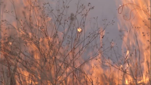 flames engulf grass on the savanna. available in hd. - hd format stock videos & royalty-free footage