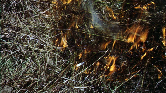 cu flames flare up from burning cigarette in grass (for start of forest fire) / canada  - zigarettenstummel stock-videos und b-roll-filmmaterial