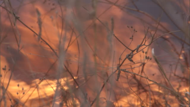 flames flicker while burning grass on the savanna. available in hd. - orange colour stock videos & royalty-free footage