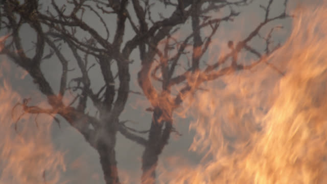 flames lick at tree on cerrado. - cerrado stock videos & royalty-free footage