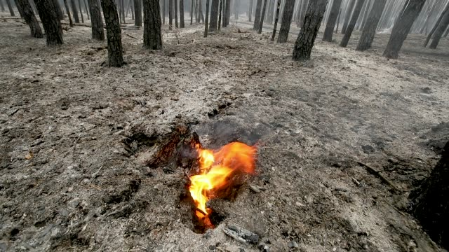 Flames rise from the remains of a burning tree trunk in a smoldering section of forest in southern Brandenburg state on August 24 2018 near Klausdorf...