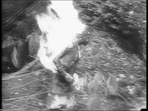 vidéos et rushes de flamethrower igniting a hideout / soldier operating a flamethrower on trees ahead of him / closer in on soldier using flamethrower and turning away... - guerre du pacifique