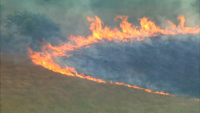 vídeos de stock, filmes e b-roll de flaming grasslands of bangweulu marsh, zambia, africa - pântano