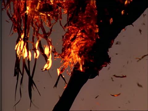 vídeos de stock, filmes e b-roll de flaming leaves fall off a tree. - fire natural phenomenon