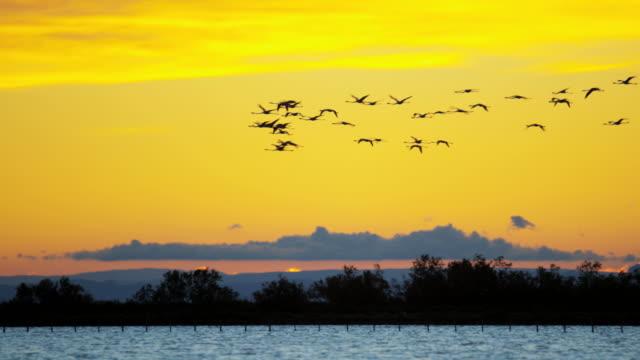 flamingo bird animal flying water france camargue sunset - camargue stock-videos und b-roll-filmmaterial