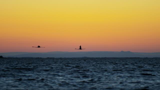 Flamingo bird animal flying water France Camargue sunset