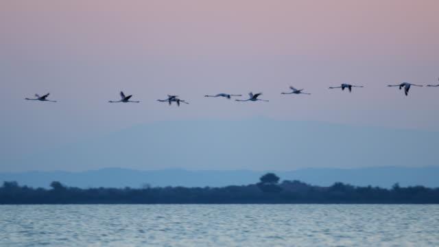 Flamingo bird flock flying sunset water France Camargue
