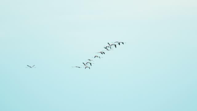 Flamingo bird flying flock water France Camargue free