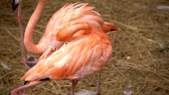 flamingo bird - anthurium stock videos & royalty-free footage