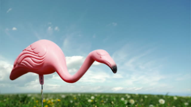 Flamingo Timelapse