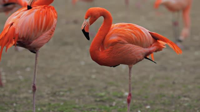 flamingo - pink stock videos & royalty-free footage
