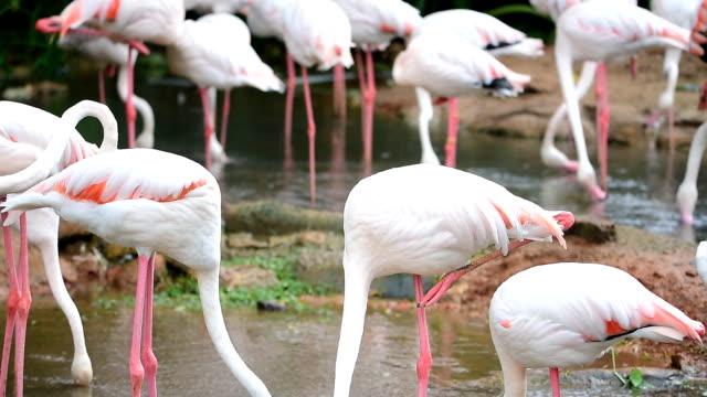flamingo - flamingo chick stock videos & royalty-free footage