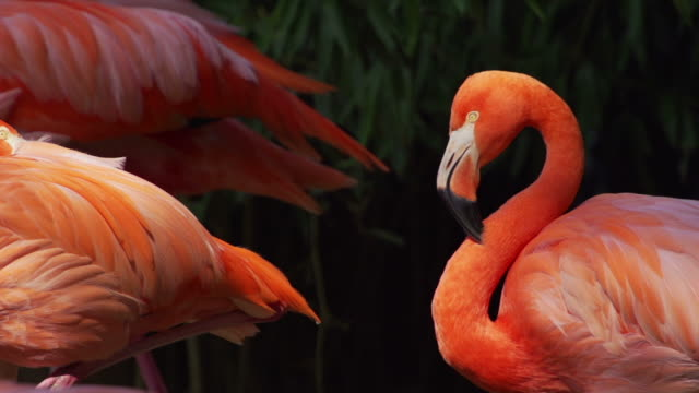slow motion: flamingo - flamingo bird stock videos & royalty-free footage