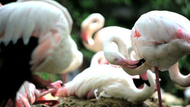 vidéos et rushes de flamingo - république d'afrique du sud