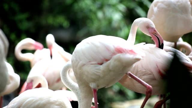 vídeos y material grabado en eventos de stock de flamingo - pata de animal pierna