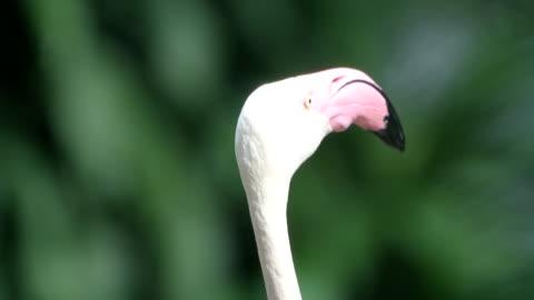 vidéos et rushes de flamingo - humour