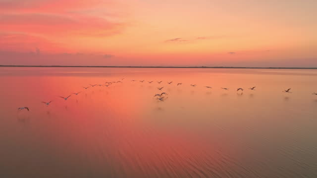 aerial slo mo flamingos flying in lagoon at dusk - large group of animals stock videos & royalty-free footage