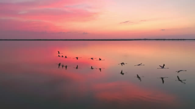 aerial slo mo flamingos flying in lagoon at dusk - flamingo bird stock videos & royalty-free footage