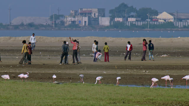 flamingos foraging in lake water against a background of children playing cricket. - 食糧を捜す点の映像素材/bロール