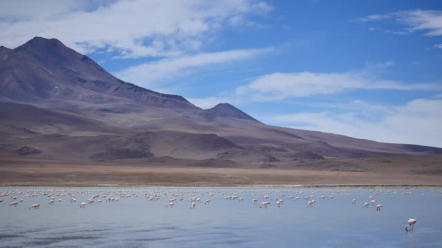 Flamingos in Atacama dessert