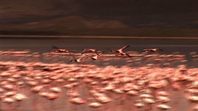 フラミンゴの砂漠 - タンザニア点の映像素材/bロール