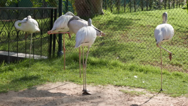 flamingos in the zoo - animal neck stock videos & royalty-free footage