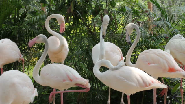 flamingos - colony stock-videos und b-roll-filmmaterial