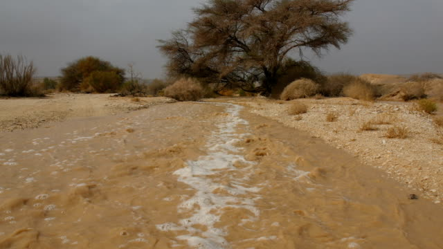 flash flood in the desert /arava valley& negev desert , israel - negev stock videos & royalty-free footage