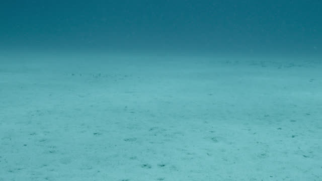 flat sandy seabed, japan - sottomarino subacqueo video stock e b–roll