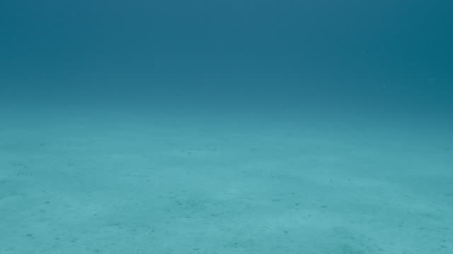 flat sandy seabed, japan - seabed stock videos & royalty-free footage
