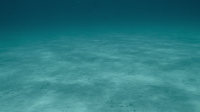 stockvideo's en b-roll-footage met flat sandy seabed, japan - oceaanbodem