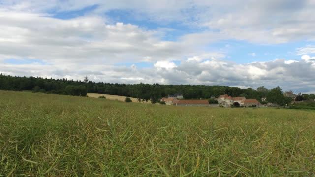 vidéos et rushes de flax fields in front of a village - prairie