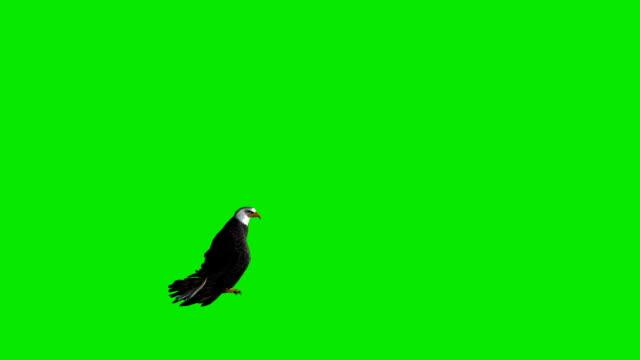 Que huyen de Águila pantalla verde (en bucle