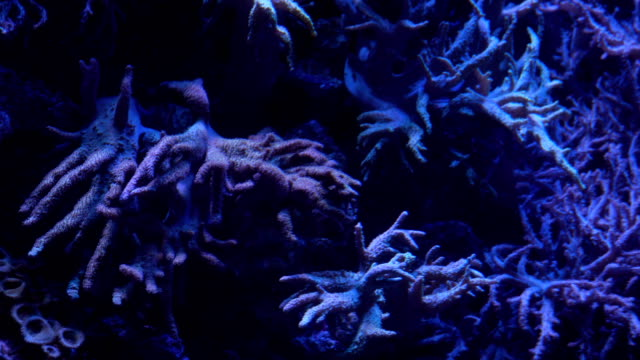 flexible leather coral under deepsea - saltwater fish stock videos & royalty-free footage