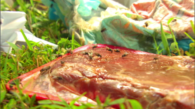 Flies crawl all over trash and rotting meat.