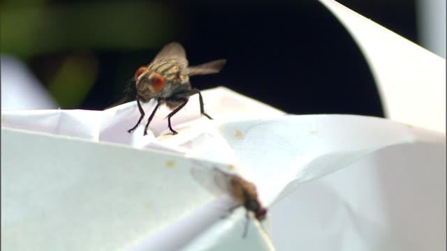 flies flutter their wings on a white surface. - gliedmaßen körperteile stock-videos und b-roll-filmmaterial