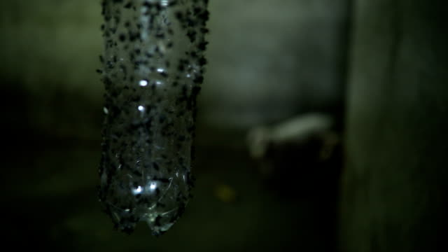 flies stuck on glue on bottle at farm - trapped stock videos & royalty-free footage