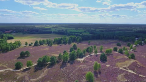 flight about heather in lower saxony / germany - air to air shot stock videos & royalty-free footage