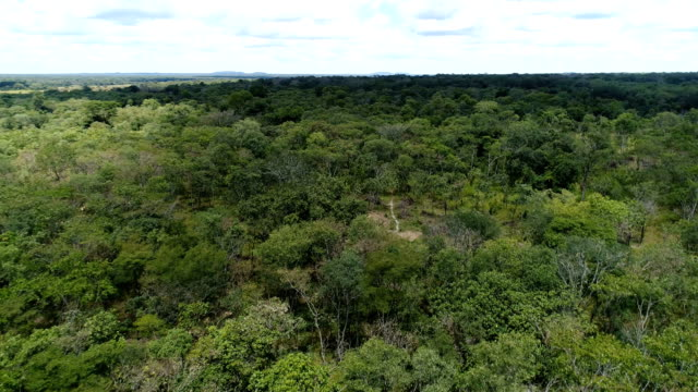A flight above the forest canopy in Lufwanyama