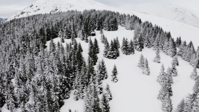 vídeos de stock e filmes b-roll de 4k. flight above winter forest on the north, aerial top view stock video - norte
